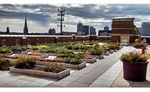 Taking a School Garden to New Heights:  How a Rooftop Garden Helped Transform an Urban Elementary School